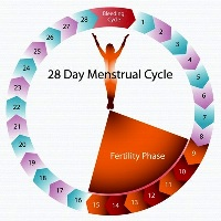 Fertility Cycle (Torrance and Fullerton)
